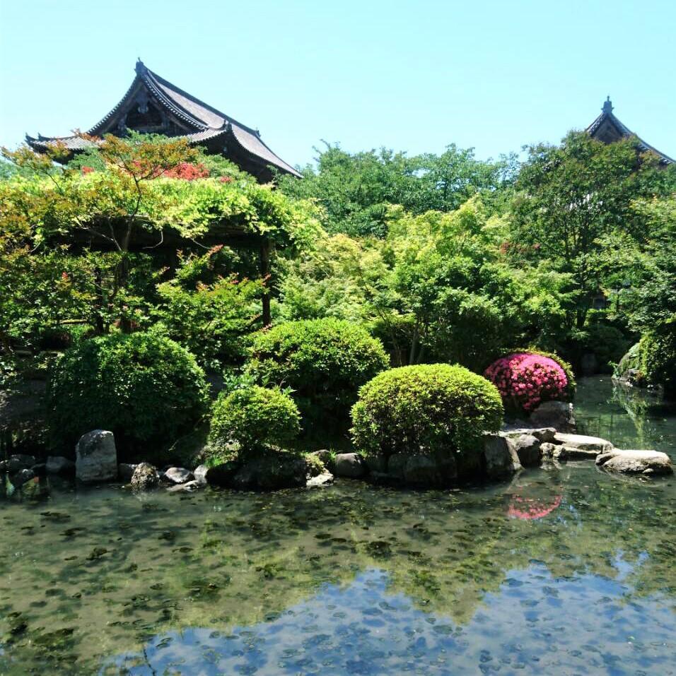 世界遺産「東寺」の新緑