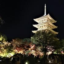 世界遺産「東寺」の紅葉