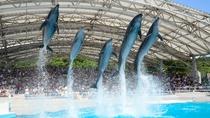 海洋博公園には沖縄美ら海水族館のほか家族で楽しめる施設がいっぱい。ホテルから車で5分。