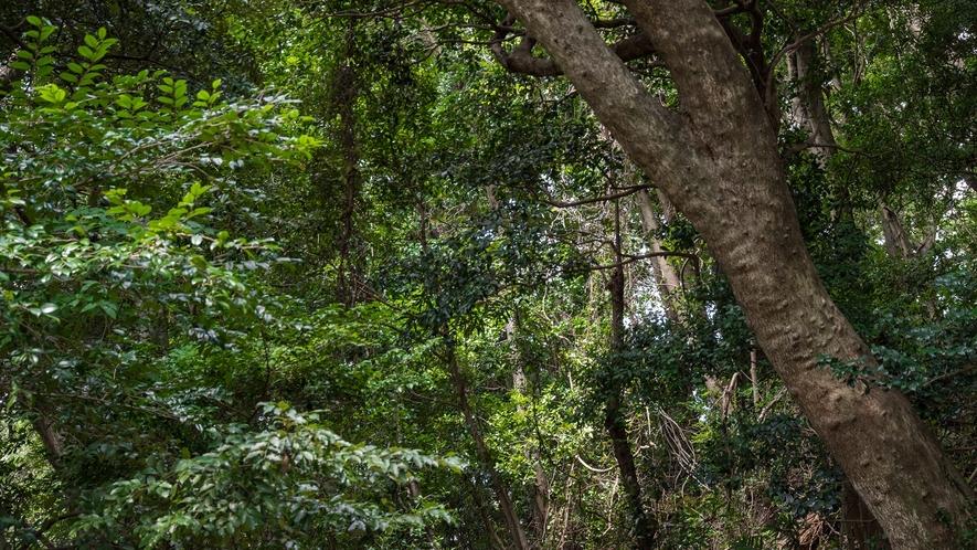 **【周辺(蘇民の森)】安静の森に守られた穏やかな地