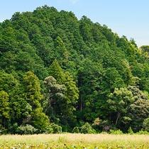 *【周辺(蘇民の森)】昔話の世界のような、どこか懐かしい風景