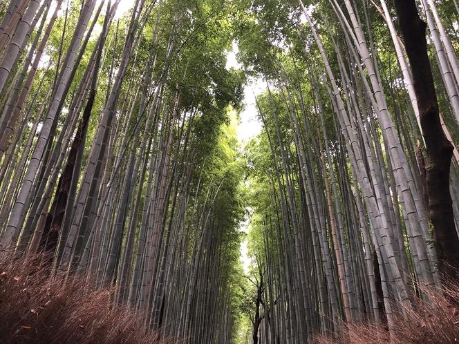 嵐山竹林の小路