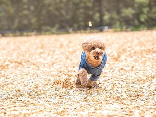 【秋冬旅セール】楽天限定☆割引&ポイント10倍!愛犬と一緒にフレンチのフルコース 寛ぎの空間と温泉