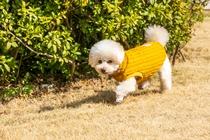 愛犬 中央広場(芝生)でお散歩