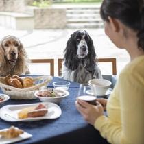 美味しい朝食をわんちゃんと一緒の食卓でお楽しみください。