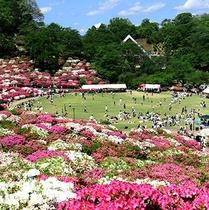 西山公園 毎年つつじが綺麗に咲きます