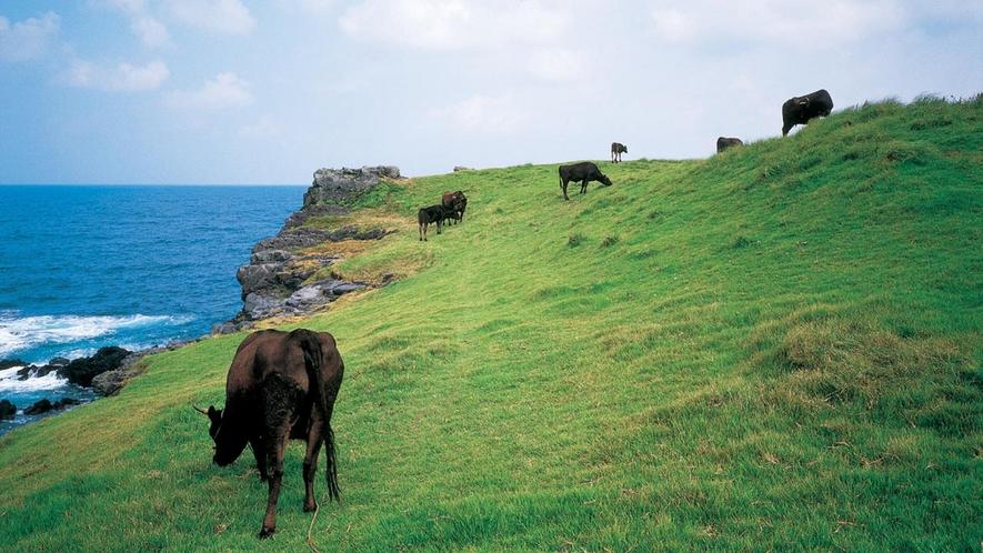 *【左京鼻】約1kmも断崖絶壁の光景が続く、壱岐随一の絶景スポットです♪