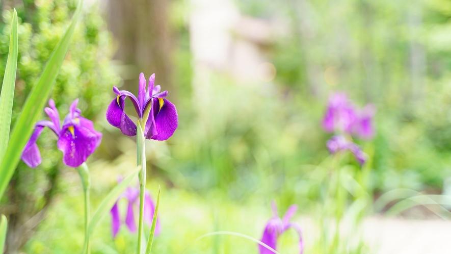 ガーデン/豊かな緑の中に咲く四季の花々が可愛らしい庭園はフォトスポットとしても人気