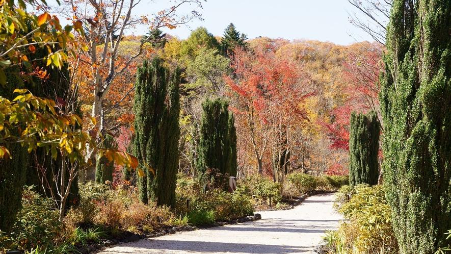 本館/庭/軽井沢らしく自然溢れる庭も、秋は綺麗に紅葉します。庭園散策しながらの紅葉狩りもおすすめです