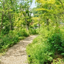 遊歩道・小川/カフェで寛いだ後は、敷地内を散策してみましょう。自然の緑や心地よい風でリフレッシュ