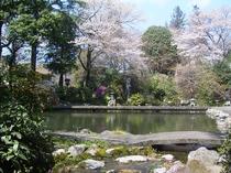 三千坪の日本庭園【春】