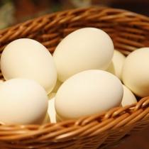 ■ゆで卵■(イメージ)