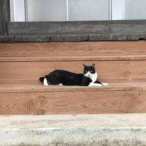 本堂でくつろぐ猫