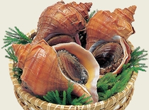 漁師直送のツブ貝(一例)