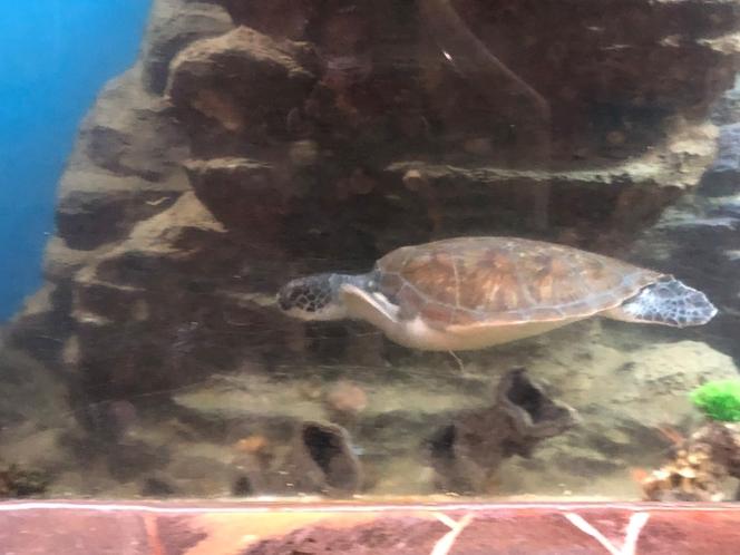 ウミガメ 水族館風呂