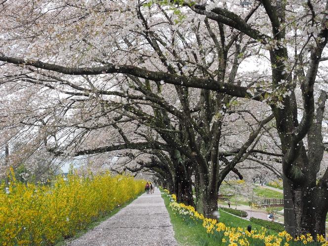一目千本桜まで車で約10分