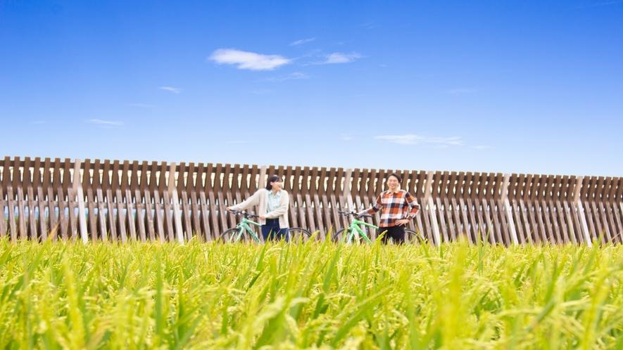 稲穂が実るこの季節のレンタサイクルは最高!