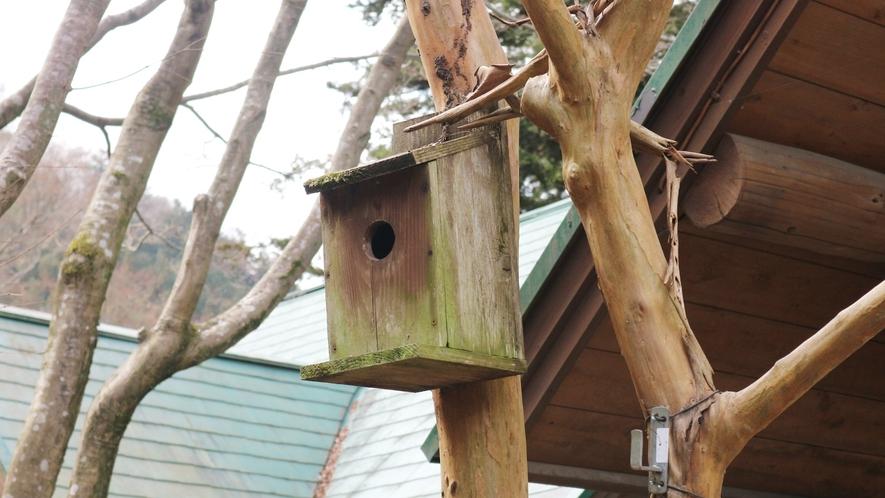 *[鳥小屋]敷地内に設置しているのでのぞいて見てください♪野鳥に会えるかも!