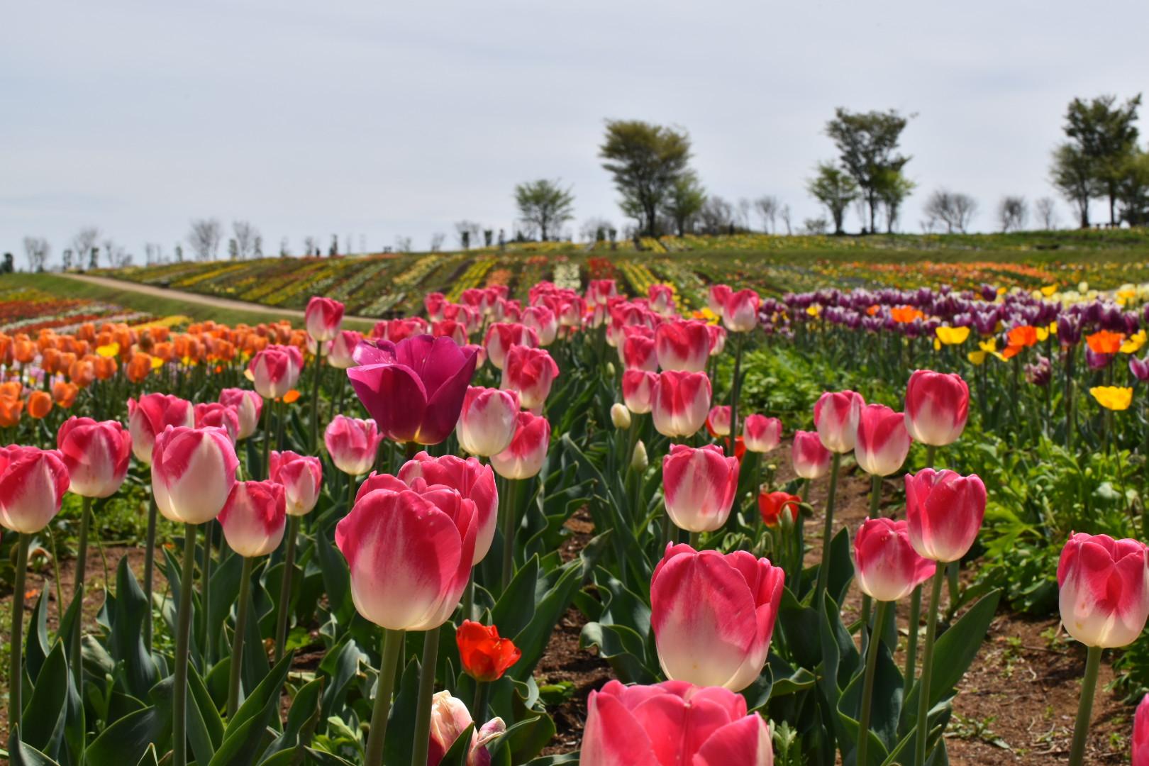「那須フラワーワールド」では、春から秋にかけて季節の美しい花景色が楽しめます。(車で約5分)