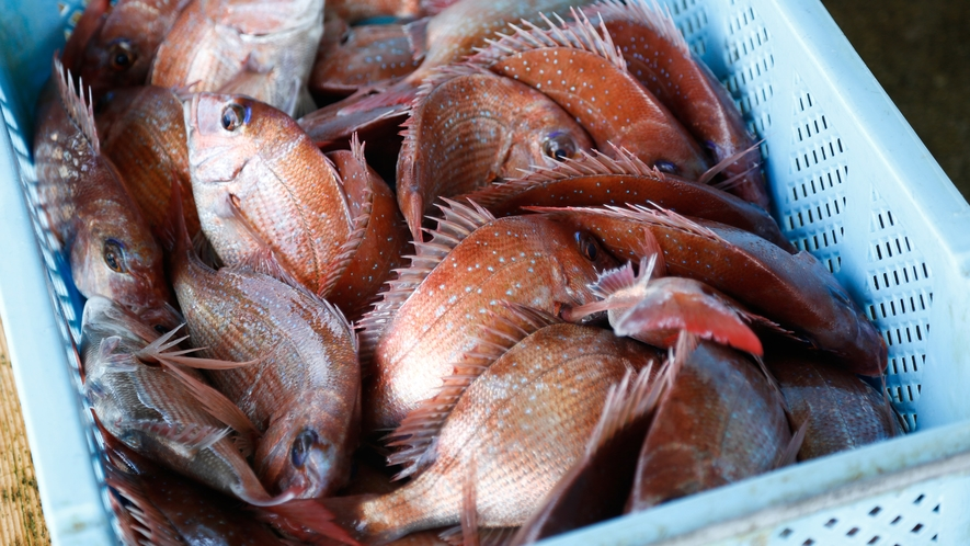 【福良漁港】鯛をはじめ鱧やタコ、淡路島3年とらふぐなど、四季を通して旬の漁獲ができる(徒歩15分)