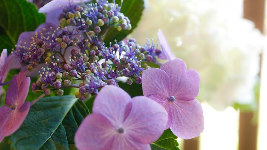 四季折々のお花もお愉しみください
