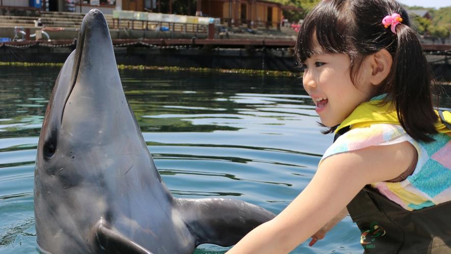 【淡路じゃのひれドルフィンファーム】イルカと握手や一緒に泳いだりできる人気の施設(車10分)
