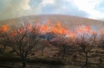 大室山の山焼き(当宿から2.3㎞)