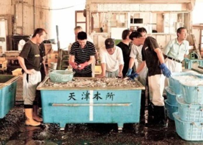 地元漁港の入札券
