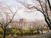 ホテルと桜