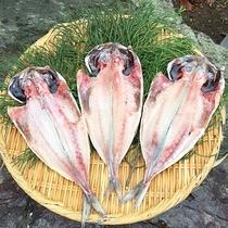 *特典・お土産の相模湾産で獲れた鮮魚の干物