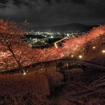 2月には河津桜&イルミネーション!毎年多くの方が訪れます。