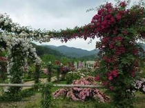 広大な敷地にバラの香りが漂う河津バガテル公園