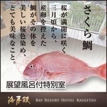 淡路を堪能 春限定のさくら鯛