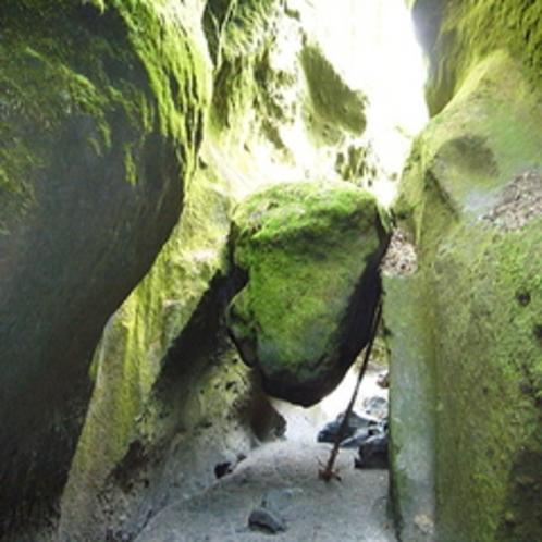 【苔の洞門】〜幻想的な緑の世界がそこに〜当館より車で約20分