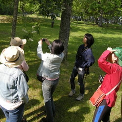 【支笏の森 朝の散歩会】〜早起きして、爽やかな森へ〜