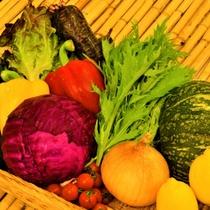 【朝食バイキング】新鮮な旬のお野菜サラダバー