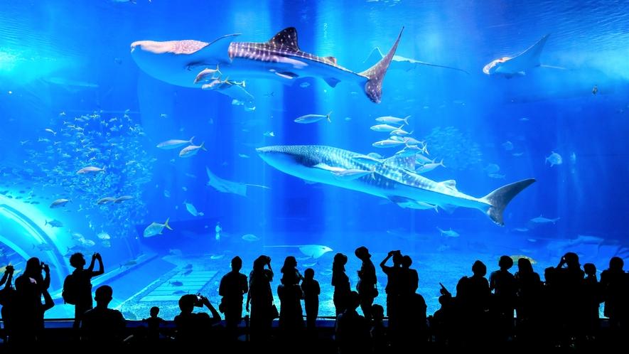 【美ら海水族館】北部エリアへの移動には那覇インターチェンジ(ホテルよりお車で約5分)が便利です。