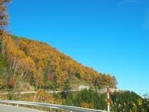御嶽パノラマラインの紅葉