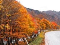日和田高原方面からの紅葉