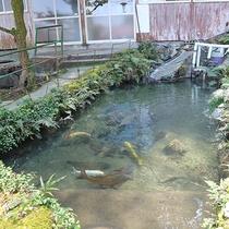 *敷地内の池には鯉が泳いでいます♪