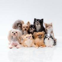 小型犬イメージ