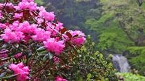 広い敷地内には四季折々の花が咲いています。
