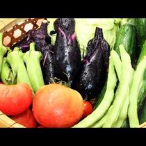 旬の夏野菜を収穫♪