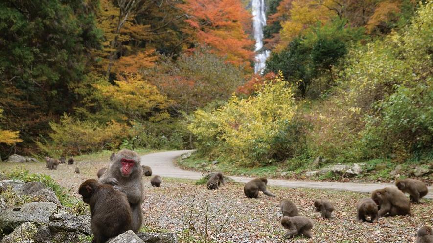 【周辺情報】神庭の滝(当コテージから車で60分)