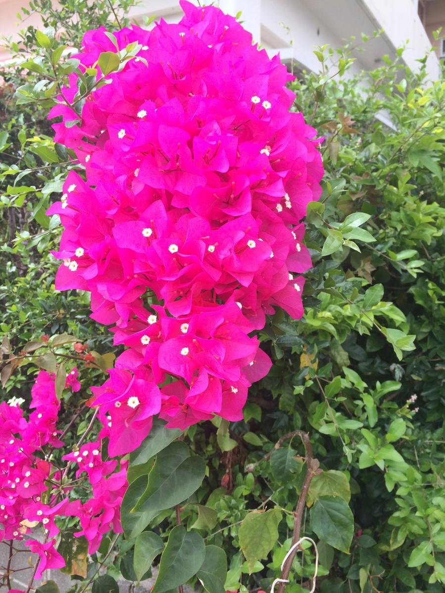 咲き乱れてます。