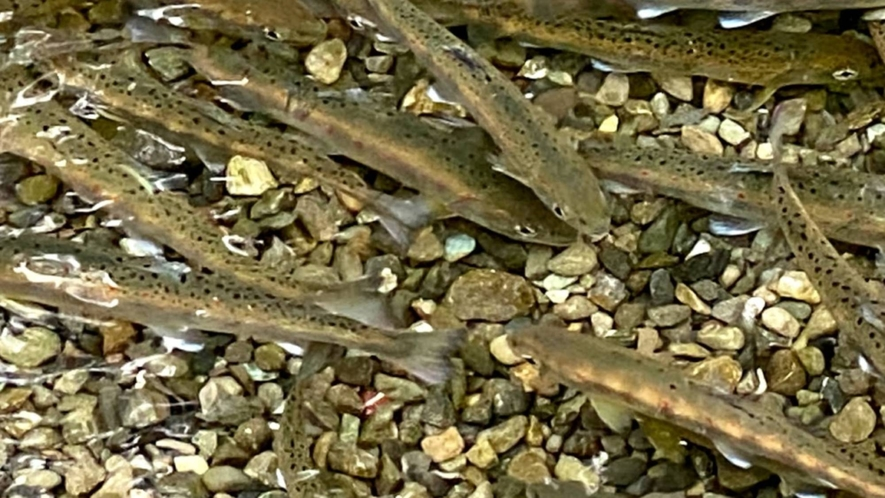 ・夏休みに会いたい!川には小魚もたくさんいます♪