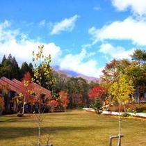 紅葉がうつくしい秋