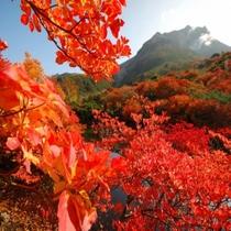 紅葉いっぱいの茶臼岳