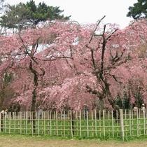 京都御苑 ※イメージ