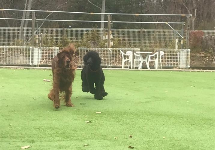 大型犬ものびのび遊べる100坪の広大なドックラン